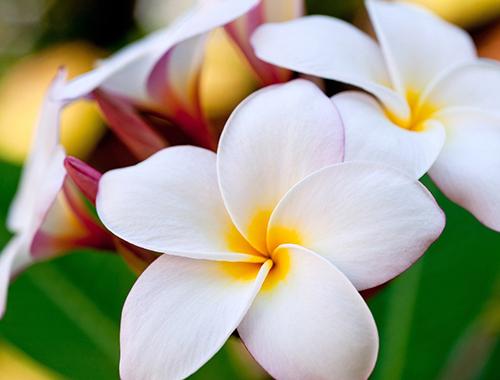 Как выбрать хороший интернет магазин цветов?