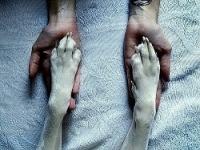 """Предпросмотр - Схема вышивки  """"Собака - друг человека """" - Схемы вышивки - MarinaKarpenko - Авторы - Портал  """"Вышивка..."""